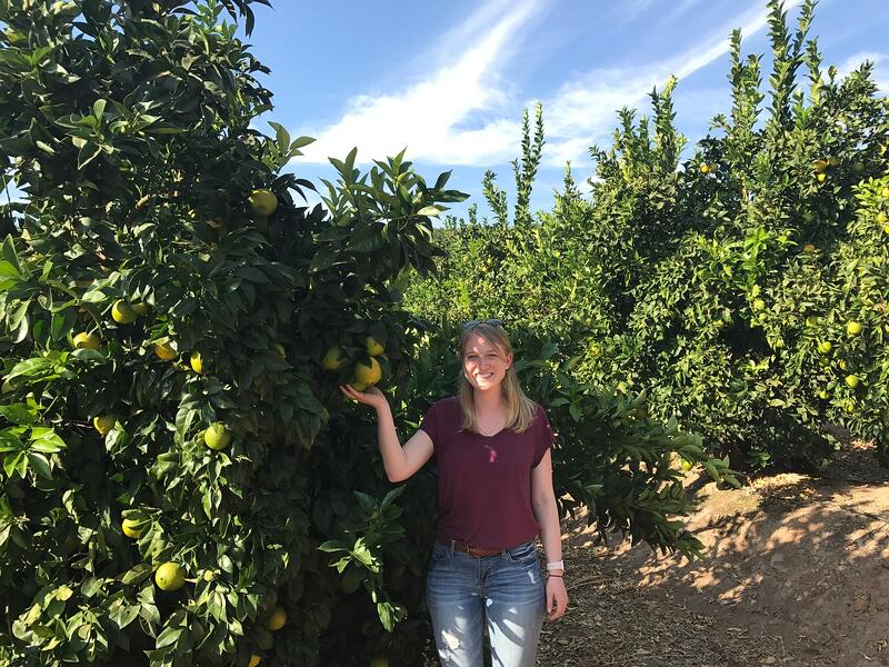 LGS Darling Citrus Chile Groves - 4