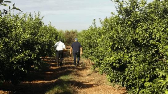 LGS_Moroccan Citrus Grove-1