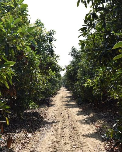 Peru field