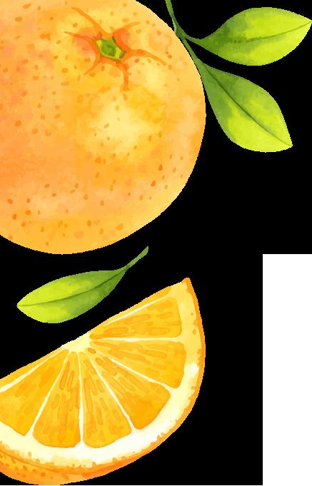 illustration of some oranges