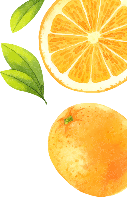 illustration of some oranges